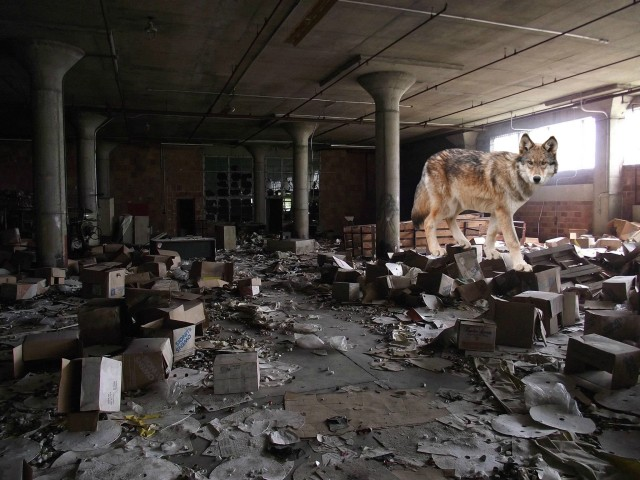 wolf in warehouse.jpg